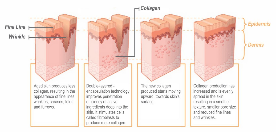 skin regeneration1